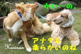 ブログ 10.6 ⑤  IMG_0111