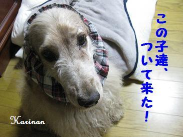 ブログ 3.25 ① IMG_2118