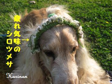 ブログ 4.14 ④IMG_2265