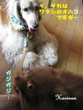 ブログ 5.22 ② IMG_2534