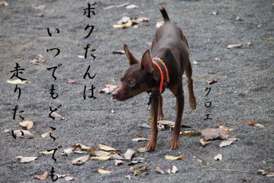 ちいさい秋4