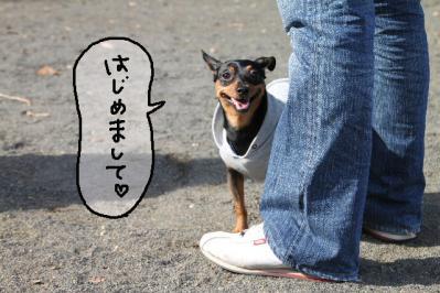 犬付き合い4