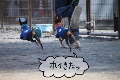 犬付き合い3