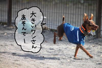 犬付き合い1