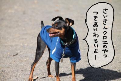 犬付き合い2