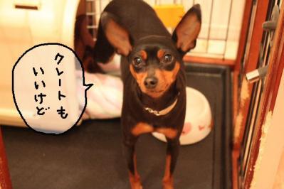 2011_03_23_6659.jpg