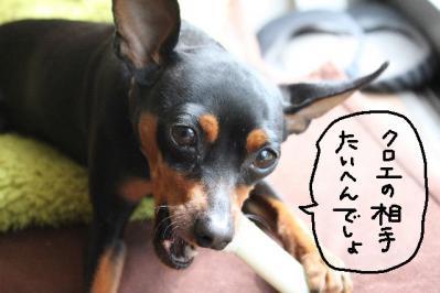 2011_03_24_6783.jpg