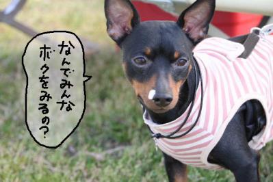 2011_04_17_7529.jpg