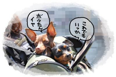 2011_04_24_7732.jpg