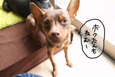2011_05_06_7833.jpg