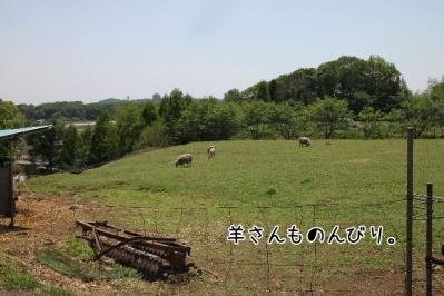 2011_05_08_7894.jpg