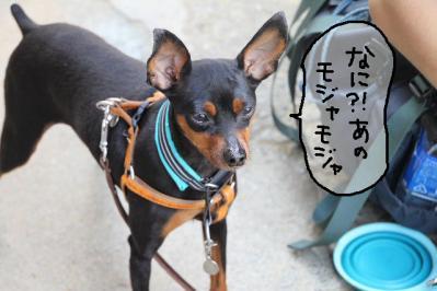 2011_05_14_8080.jpg