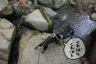 2011_05_14_8187.jpg