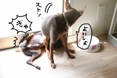 2011_05_19_8279.jpg