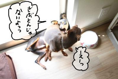 2011_05_19_8281.jpg
