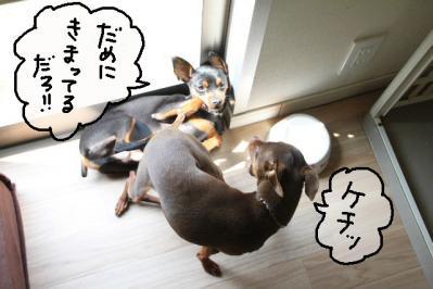 2011_05_19_8287.jpg