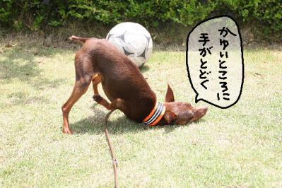 2011_05_21_8346.jpg