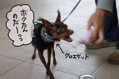 2011_05_29_8449.jpg