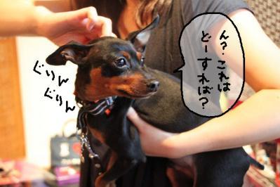 2011_05_29_8473.jpg