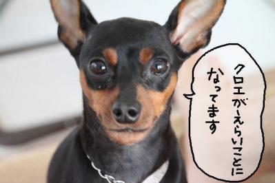 2011_06_04_8554.jpg