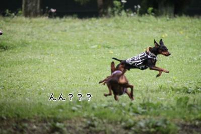 2011_06_12_8754.jpg