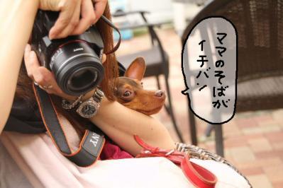 2011_06_12_8882.jpg