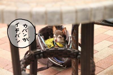 2011_06_12_8885.jpg