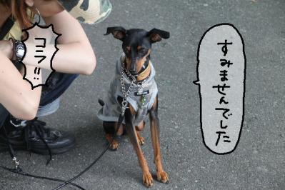 2011_06_12_9142.jpg