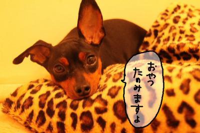 2011_07_09_9481.jpg