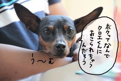 2011_07_10_9624.jpg