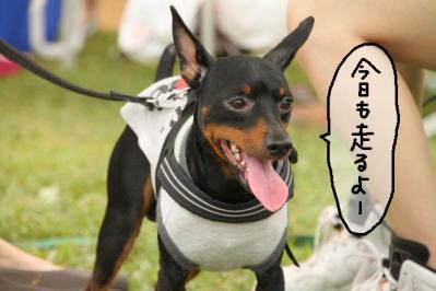 2011_07_18_9988.jpg