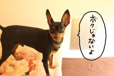 2011_07_30_9999_29.jpg