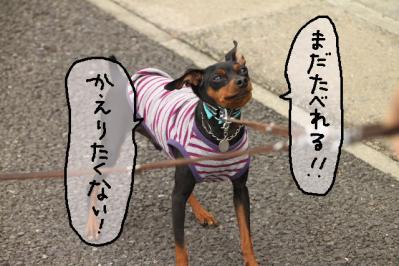 2011_08_02_9999_32.jpg