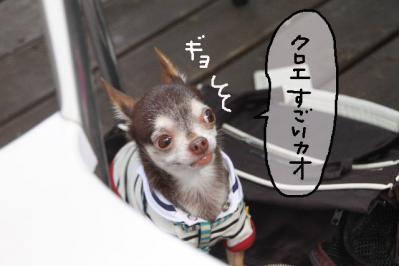 2011_08_06_9999_12.jpg