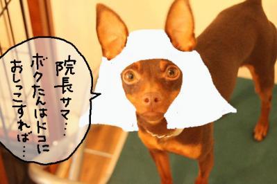 2011_08_24_9999_7.jpg