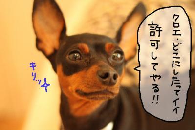 2011_08_24_9999.jpg