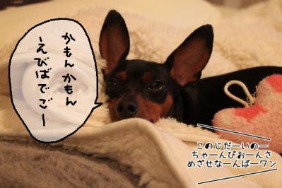 2011_09_07_9999_25.jpg