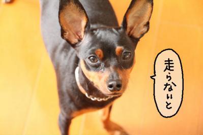 2011_09_09_9999_12.jpg