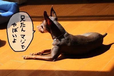 2011_09_11_9999_110.jpg