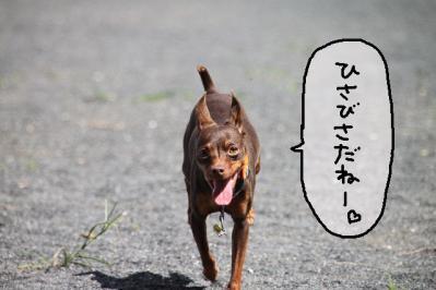 2011_09_11_9999_137.jpg