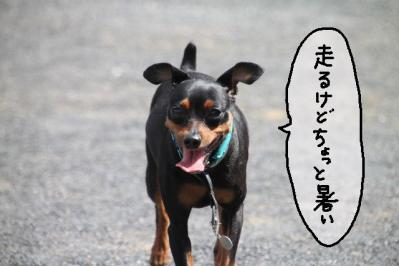 2011_09_11_9999_163.jpg