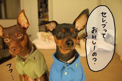 2011_09_29_9999_11.jpg