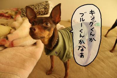 2011_09_29_9999_20.jpg