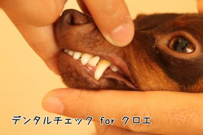 2011_10_02_9999_3.jpg