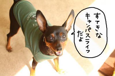 2011_10_08_9999_13.jpg