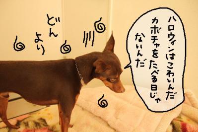 2011_10_15_9999_25.jpg