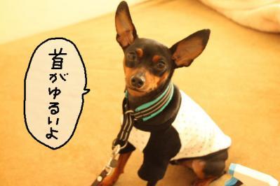 2011_10_18_9999_11.jpg