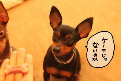 2011_10_20_9999_6.jpg