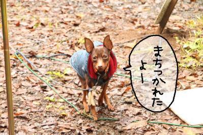 2011_10_22_9999_12.jpg
