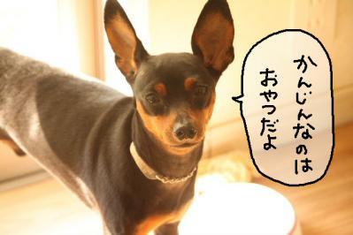 2011_11_04_9999_6.jpg